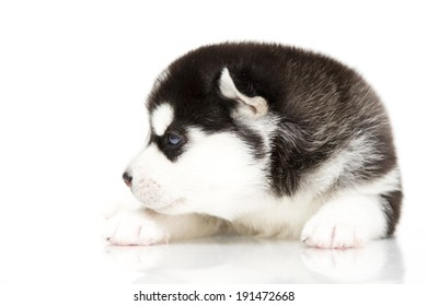 Puppy of Siberian Husky, age of 3 weeks, isolated on a white background