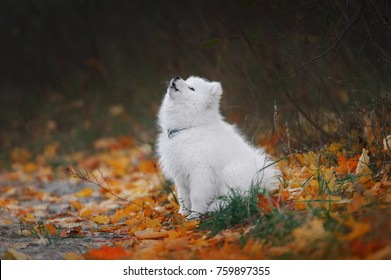 puppy sits on the autumn background and howls