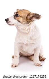 The puppy sits on his hind legs and looks to the left. As package design element for dog food. Isolated on a white background