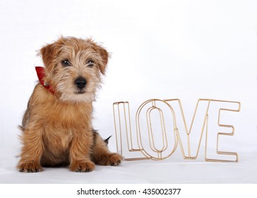 Puppy sitting beside the word love which is made out of bronze colored metal wire