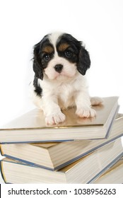 Puppy sitting on a pile of books