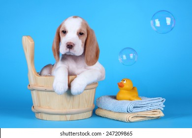 puppy sitting in a tub with bubbles and a rubber ducky ready for his bath