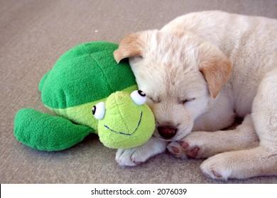 puppy sleeping next to friend turtle