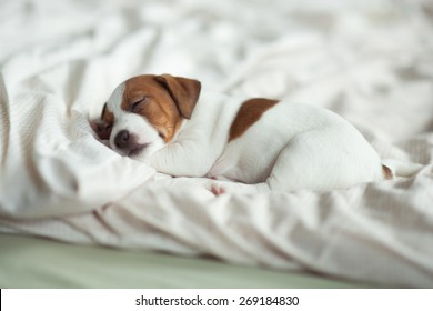 puppy sleeping on the bed