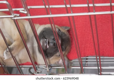 The puppy is sleeping on the cage