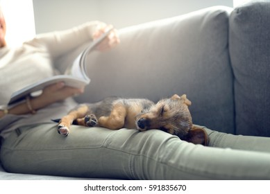 Puppy sleeping on owner laps, while unrecognizable woman in light jeans reading magazine laying on couch at home