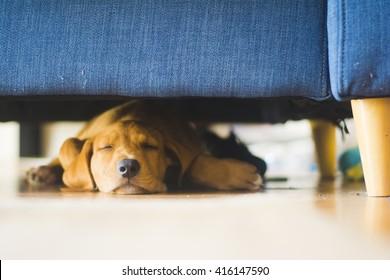 Puppy sleeping under couch