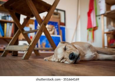 A puppy sleeping in a workshop