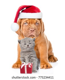 puppy and small kitten in red santa hats  together. isolated on white background