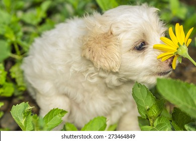 puppy smelling a flower