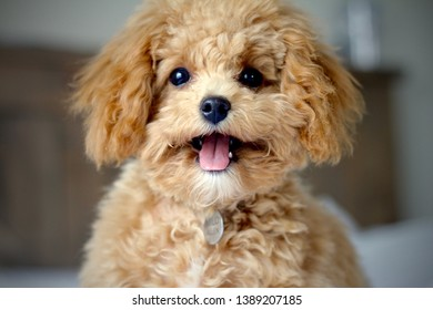Puppy smiling at the camera