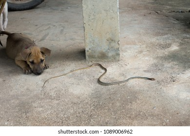 puppy And snake