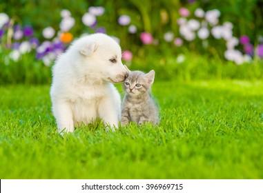 Puppy sniffing kitten on green grass