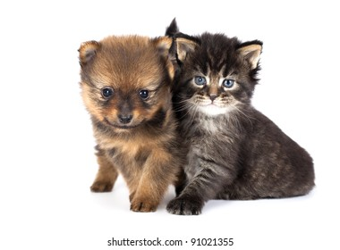 Royalty Free Kitten And Puppy Stock Images Photos Vectors