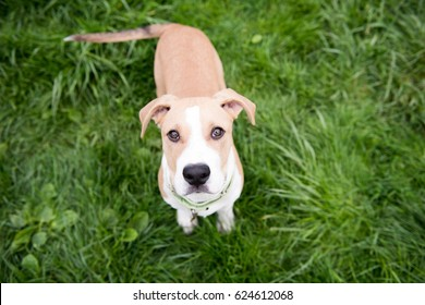 Puppy Standing in Lush Green Grass Outside