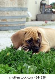 Puppy stole a bone