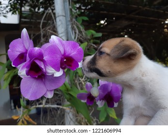 Puppy stops to smell the flowers.