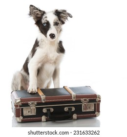 Puppy with suitcase isolated on white