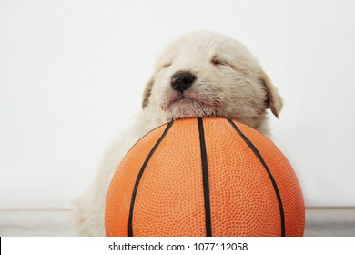 The puppy was tired of the game and fell asleep