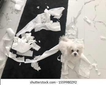 Puppy in trouble made mess