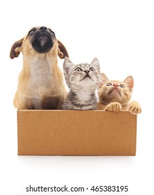 Puppy and two kittens in a box isolated on white background.