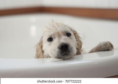 Puppy unhappy with his bath