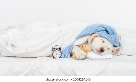 Puppy wearing warm hat hugs favorite toy bear and sleeps under white blanket with alarm clock. Empty space for text