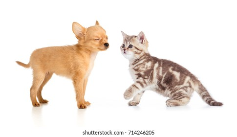 puppy and young cat isolated on white.