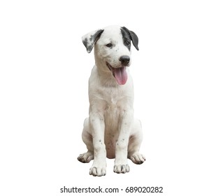 puppy,dog isolate with clipping path