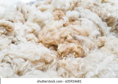 A pure Alpaca wool.