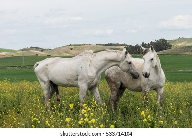 Horses Mating Images, Stock Photos & Vectors | Shutterstock