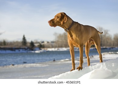 pure breed dog in natural environment