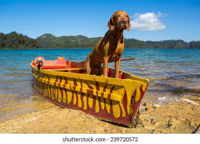 pure breed vizsla dog standing in a fishing boat