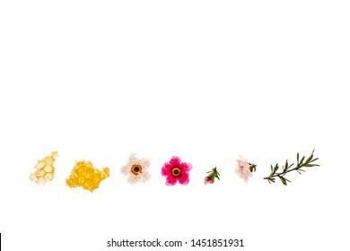 pure organic manuka honey with pink and white manuka flowers on white background