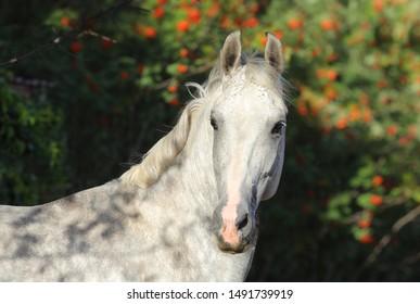 Horse Headshot Images, Stock Photos & Vectors | Shutterstock