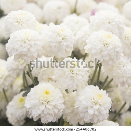 Pure White Flowers Stock Photo Edit Now 254406982 Shutterstock