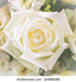Pure white rose background for mothers day card