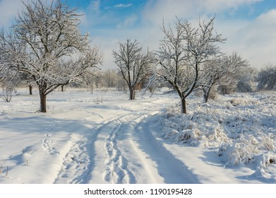 Pure winter landscape with an earth road in orchard