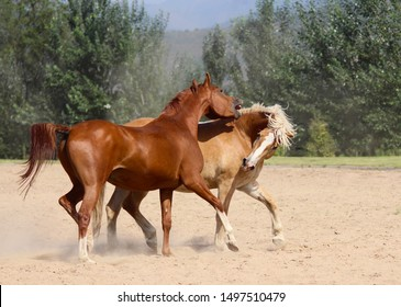 purebred arabian horse, haflinger figure out relationships, horse games, friendly quarrel, so different friends