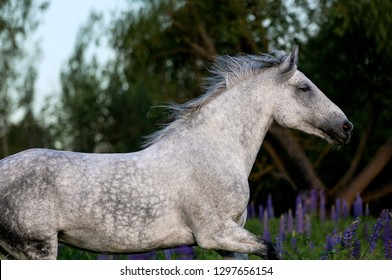 Purebred arabian horse running free on the beautiful nature background.