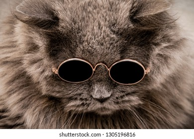 374bb18b8 Cat in Round Sunglasses Stock Photos, Images & Photography ...