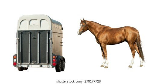 Purebred chestnut stallion and trailer isolated over a white