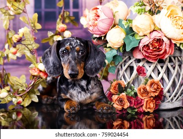 purebred dachshund dog and flowers