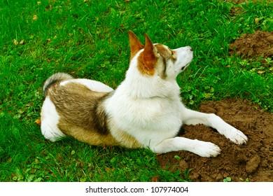 Purebred dog in a garden.