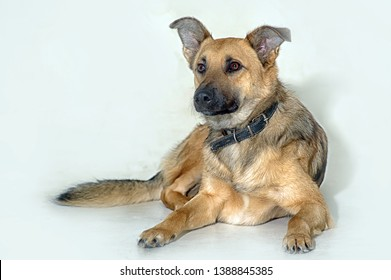 purebred dog pooch on a white background in the studio