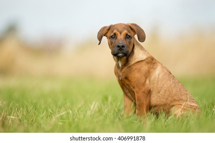 Purebred dog puppy outdoors in the nature on sunny summer day.