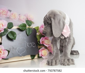 Purebred Great Dane puppy with a sign that says love