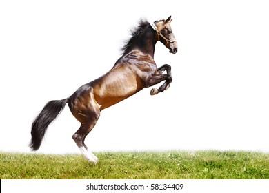 purebred horse jumping