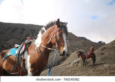 purebred horse on nature