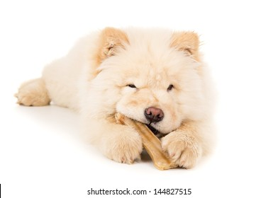 Purebred puppy with a bone